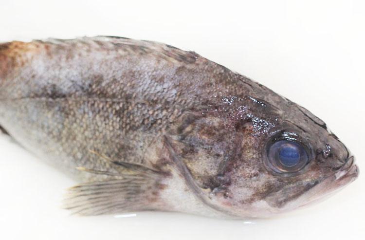 新鲜黑鱼 1斤左右/条 蛇头鱼 蛇头 乌棒 淡水黑鱼 海产品 大连海鲜
