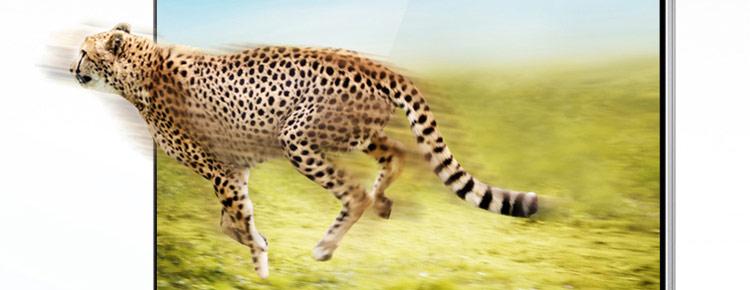 豹 豹子 壁纸 动物 桌面 750_290